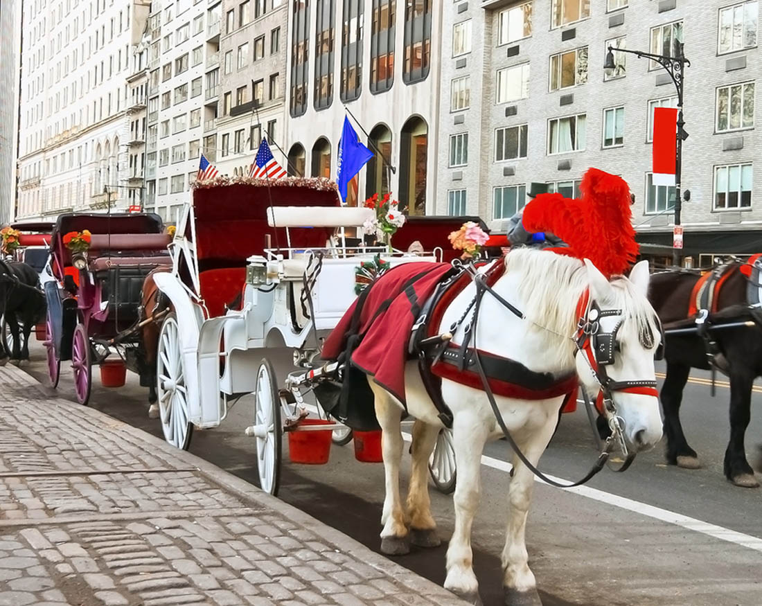 Old-fashioned horse and carriage rides in town and through Acadia ...